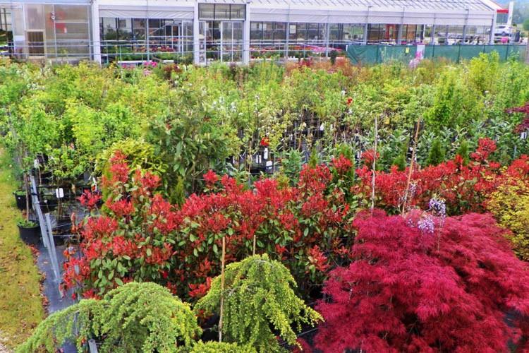 Vivaio Arbusti
