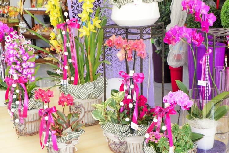 Orchidee a festa