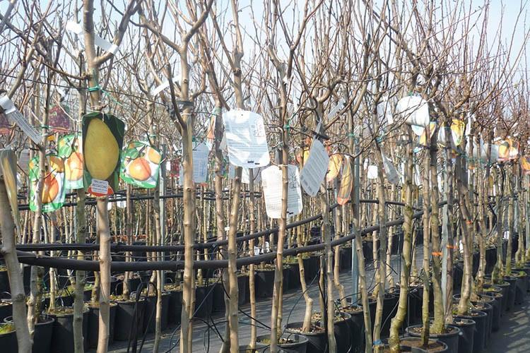 Vivaio piante da frutto