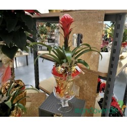 Bromelia Guzmania vaso Grande