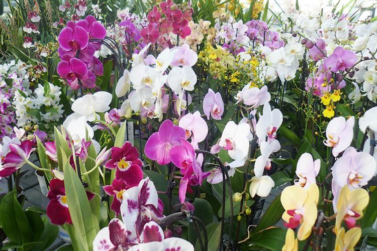 Orchidee misto