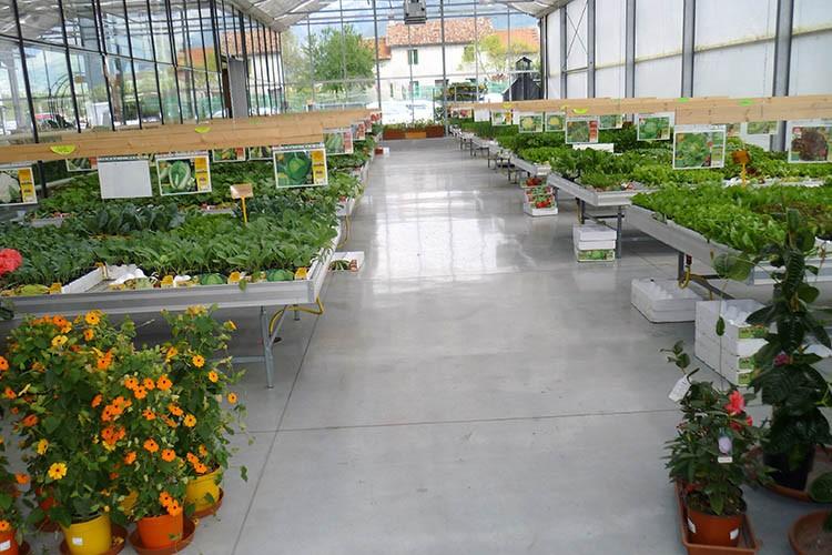 Serra piante orto